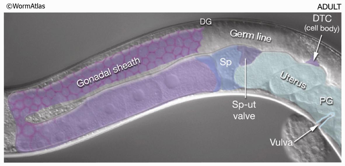Anal Sex Sperm 79