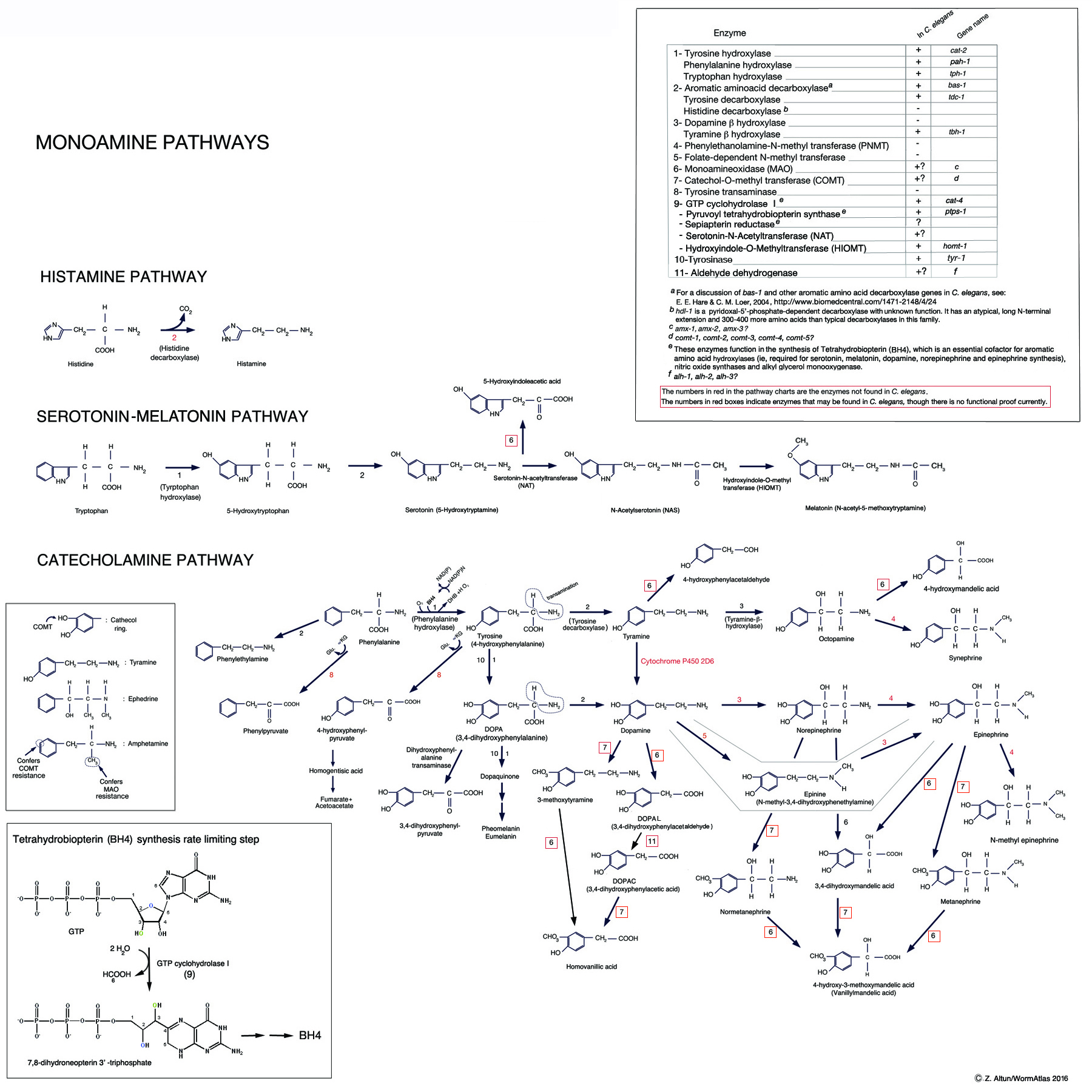 neurotransmitters table
