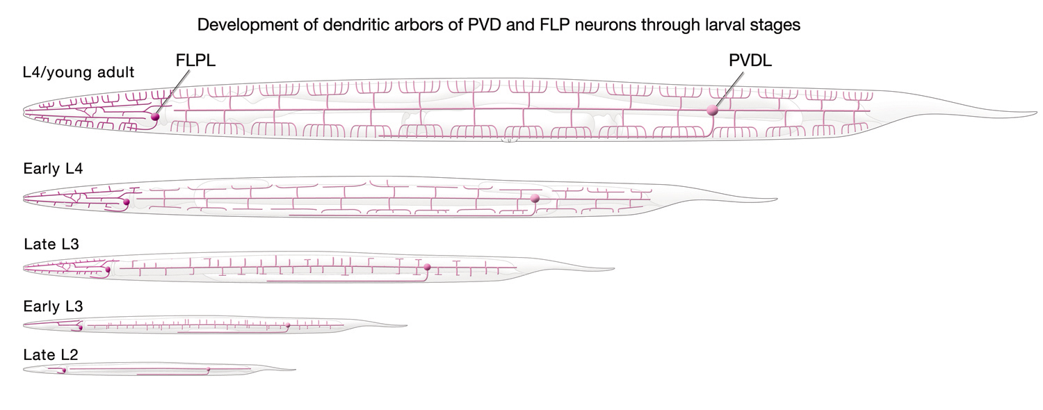 Individual Neurons Pvd 1channel Dvc Wiring Diagram